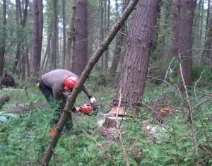 CS32 Felling and Processing Trees over 380mm