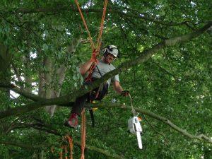 CS39 Chainsaw free fall techniques