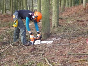 CS30-31 chainsaw course