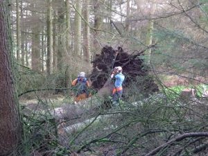 CS50 Emergency Treework Operations 21-05