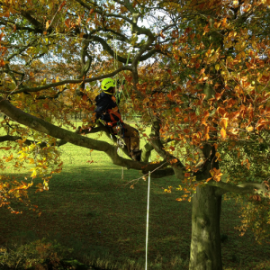 CS38 Tree Climbing and Aerial Rescue