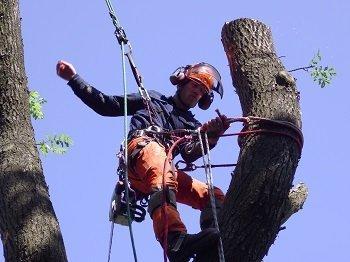 CS41 Aerial Tree Rigging