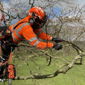 Aerial Tree Pruning with silkie saws CS40