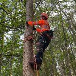 Aerial tree rigging CS41