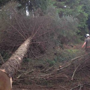 Fell trees over 380mm course with Lowe Maintenance