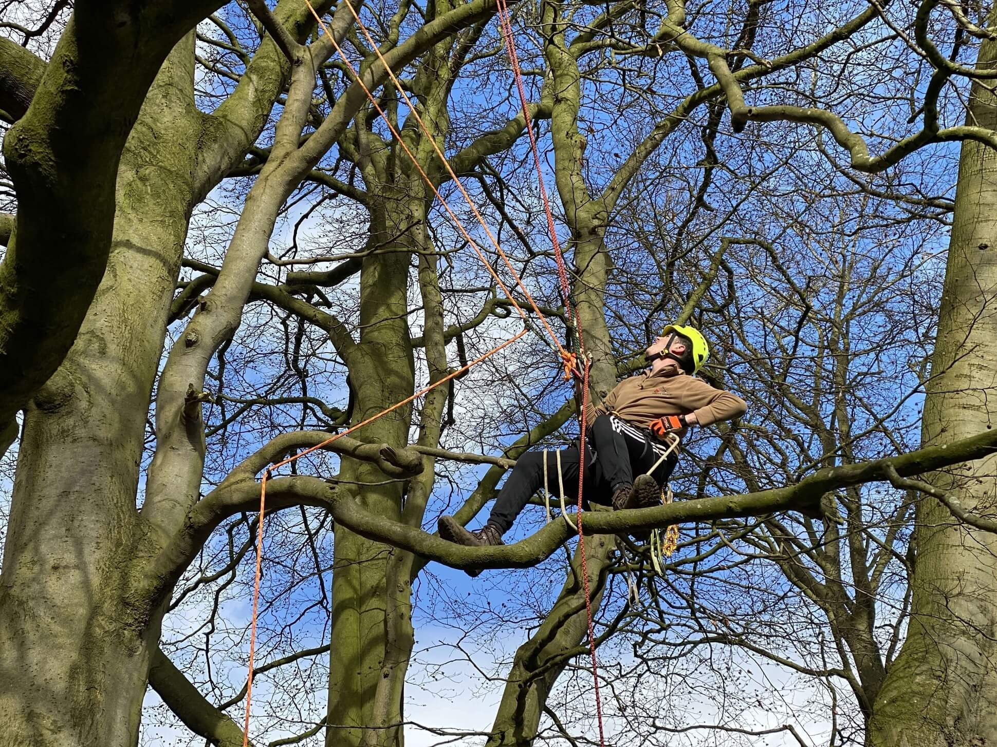 Branch walking during the tree climbing and rescue course CS38