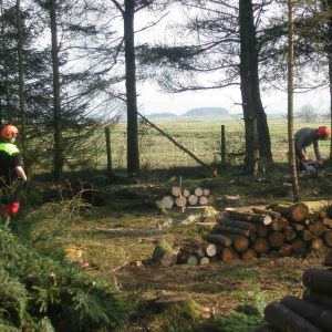 Chainsaw maintenance, cross cutting and stacking timber 20-03 (CS30) training course in North Yorkshire