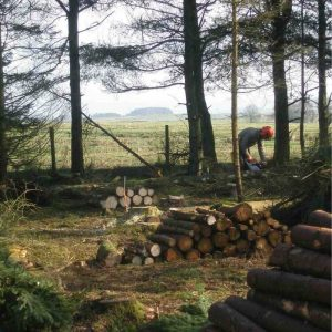 Chainsaw maintenance CS30 training courses in North Yorkshire
