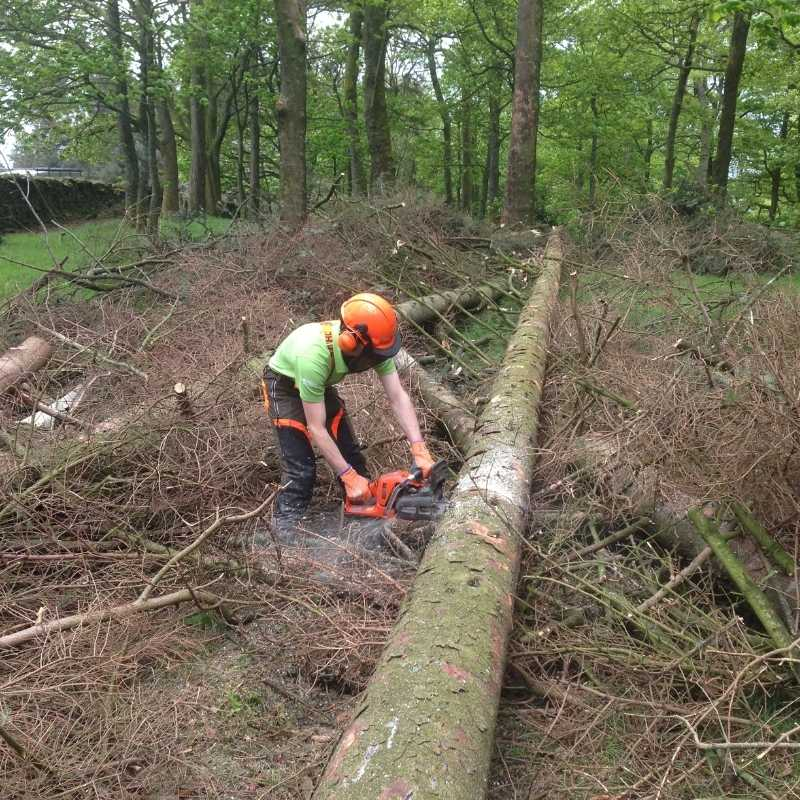 Felling small trees course upto 380mm CS31 North Yorkshire