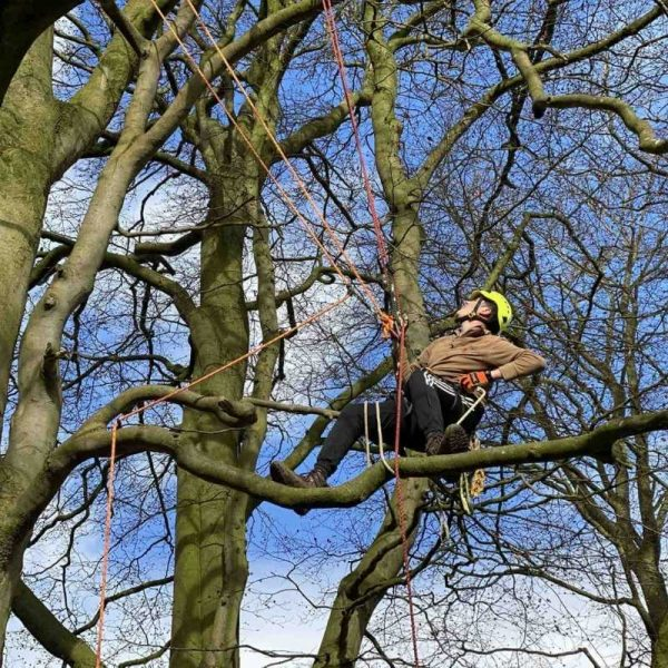 Branch walking during the tree climbing and aerial rescue course CS38 training course in North Yorkshire. Perfect for arborists and utility workers