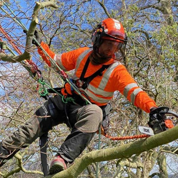 Using a chainsaw from a rope and harness