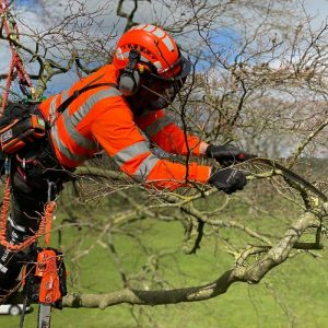 Aerial Tree Pruning with silkie saws CS40 training course in North Yorkshire. Correct tree pruning techniques