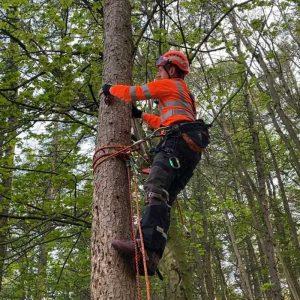 2021 Aerial Tree Rigging training course CS41