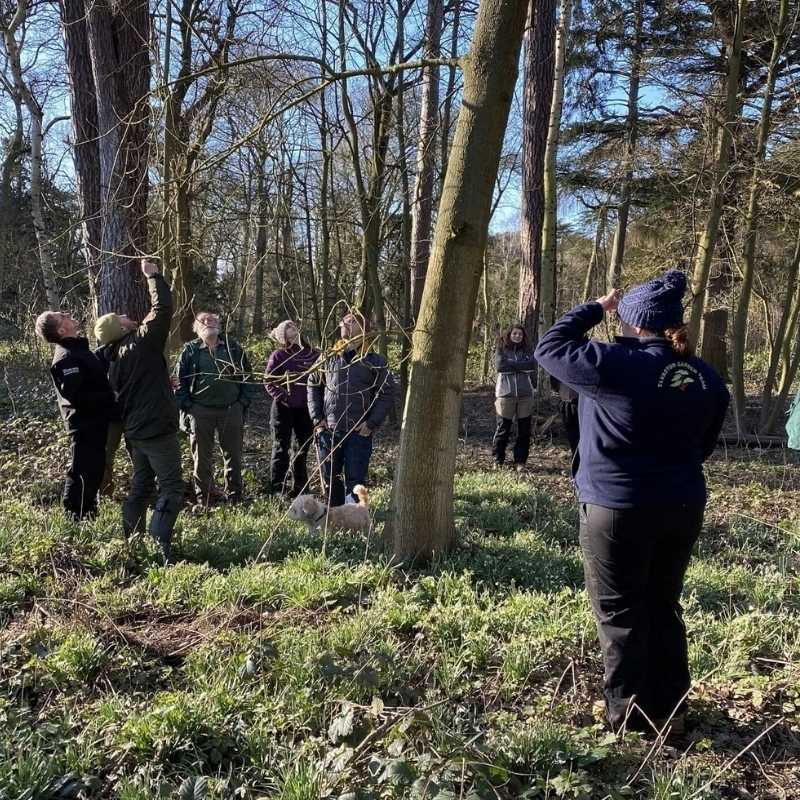 Lowe Maintenance Tree Inspection Survey Course in North Yorkshire