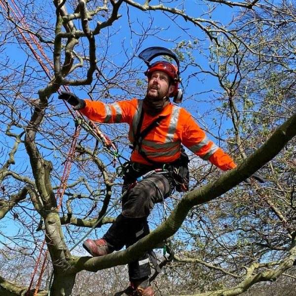 Ecologists tree climbing and rescue CS38 course