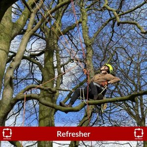 Branch walking during the tree climbing and aerial rescue refresher course CS38 training course in North Yorkshire. Perfect for arborists and utility workers.
